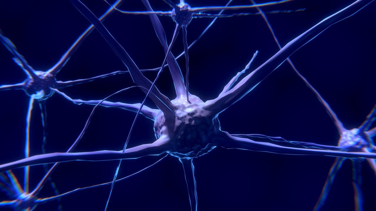 Показана возможность восстановления потенциала стволовых клеток мозга у мышей
