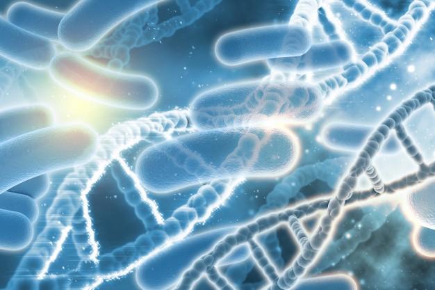 Диабет нарушает антибактериальную активность мультипотентных стромальных клеток