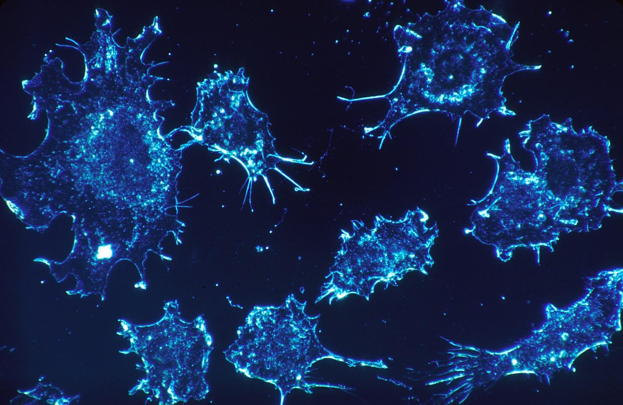 Описан способ адресной доставки лекарств в опухоль с помощью стволовых клеток