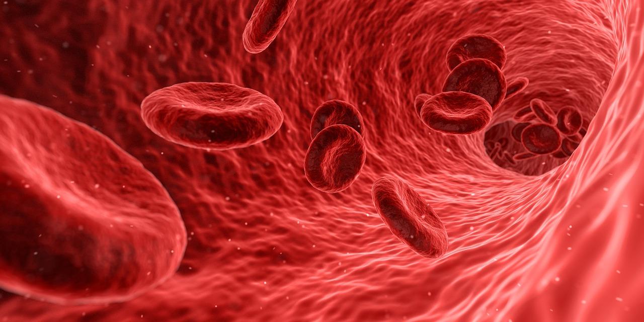 Выход стволовых клеток в кровеносное русло зависит от их механических свойств