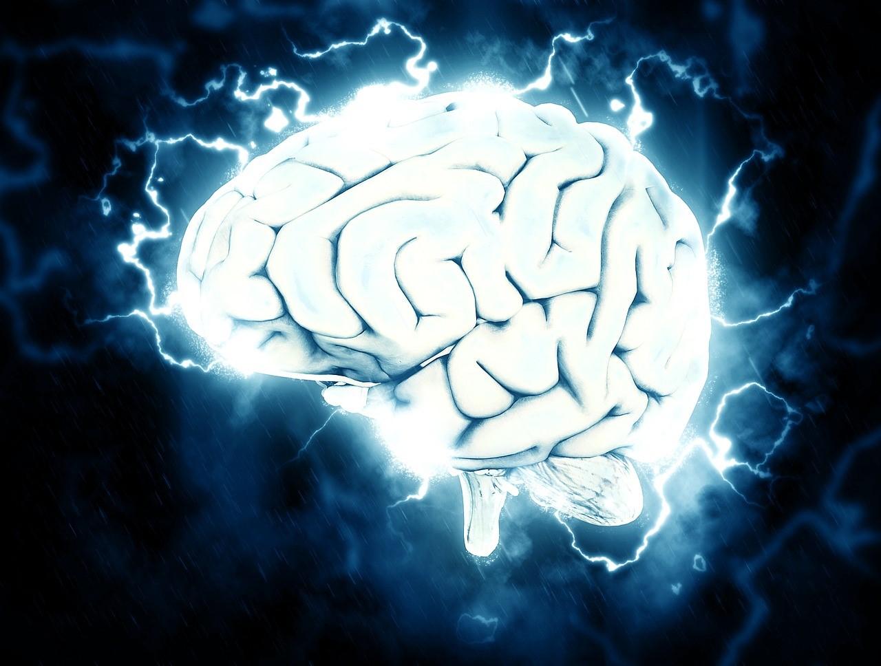 Функции мозга свиньи удалось восстановить через четыре часа после смерти