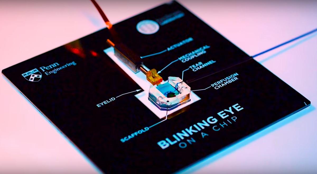 Глаз-на-чипе был использован в разработке методов лечения синдрома сухого глаза