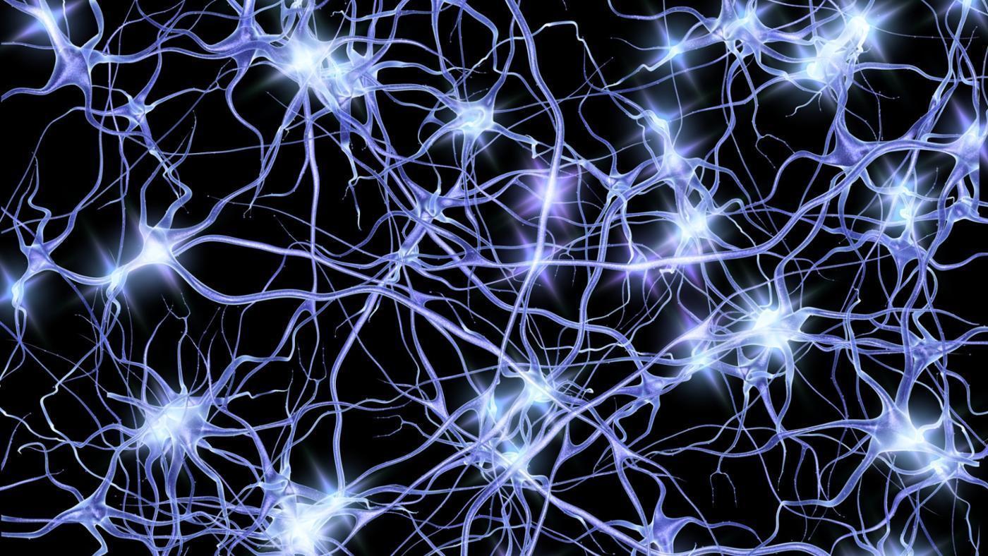 Американские ученые научились получать функциональные нейронные сети из индуцированных плюрипотентных стволовых клеток