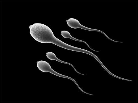Японские ученые разработали метод торможения сперматозоидов с Х-хромосомой